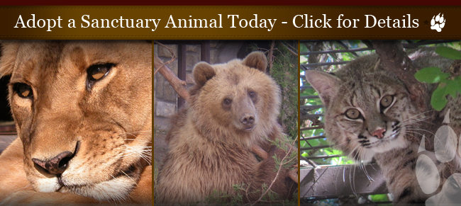 Adopt A Sanctuary Animal today!
